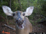 We want to see your trail camera photos