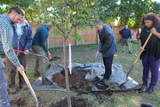 $1.5 million tree planting program in Springfield extends to 1st private yard