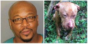 Jefferson County sheriff's deputies responded to a dog-fighting operation on Sunday, Aug. 19, 2018.