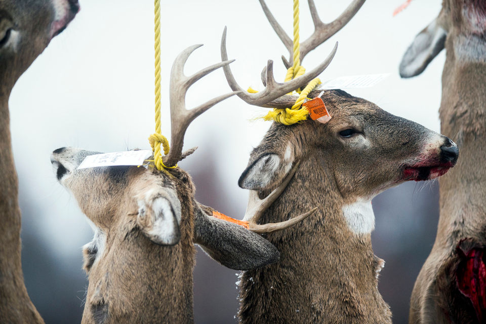 Michigan deer hunters claim bragging rights on opening day of firearm season