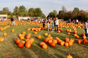 'Fall Festival at the Mount' returns this weekend, features Staten Island's largest pumpkin patch