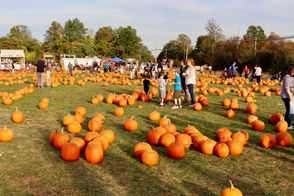 STATEN ISLAND, N.Y. -- With temperatures dipping into the 60s, there's no better time to enjoy the traditional Fall Festival at The Mount. And it's free!