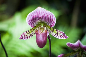 Admire the graceful blooms at the Alabama Orchid Society's festival and sale. This free event has lots of flower power, and its 34th incarnation is happening this weekend at Birmingham Botanical Gardens. Hundreds of orchids will be on view in the auditorium, along with plants you can buy from vendors. Hours are 9 a.m.-5 p.m. today and Saturday, 11 a.m.-3 p.m. Sunday. Alabama Orchid Society 34th Festival and Sale, Sept. 21-23, Birmingham Botanical Gardens, 2612 Lane Park Road, free admission, 205-447-5285.