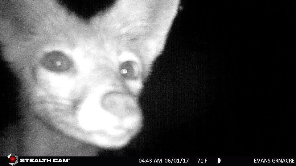 Our readers really stepped up when we asked them to share their wildlife photos from these cameras.