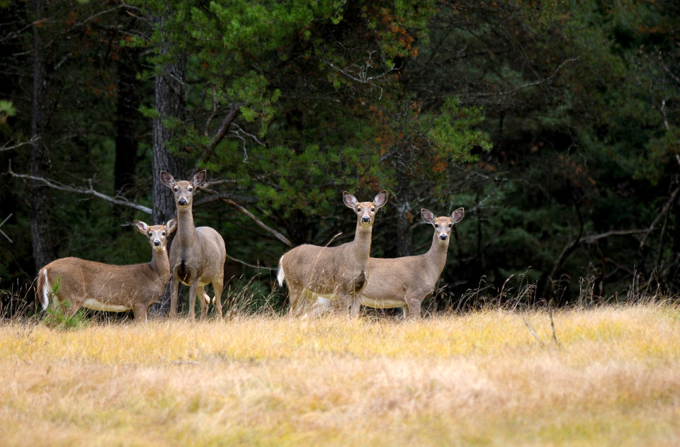 michigan s best and worst places for deer hunting based on 2017