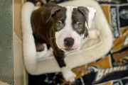 Animals in need of homes for Christmas arrive in Ann Arbor