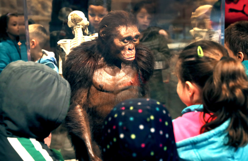 Cleveland Museum of Natural History celebrates Lucy, its famous hominid find