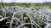 Frosty morning, mild day: Northeast Ohio weather forecast for Tuesday