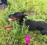 State Police in Springfield apprehend escaped dog on I-291 using teddy bear