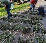 Raid nets perhaps Bethlehem Twp.'s largest seizure of weed in nearly 30 years (PHOTOS)