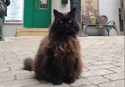 Russian museum's famous resident cat survives kidnapping, returns home feeling 'discontent'