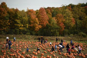 Pumpkin patches in Upstate NY: 25 best picking destinations for fall fun