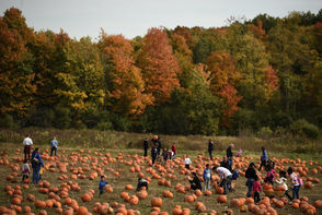 Season: Ends Oct. 28 Hours:Mon. to Fri., 10 a.m. to 5 p.m.; Sat. & Sun. 10 a.m. to 6 p.m. Admission:$8.50 Address:3232 Rippleton Road, State Route 13, Cazenovia, NY 13035 Other attractions:Playground, corn maze, wagon ride Website