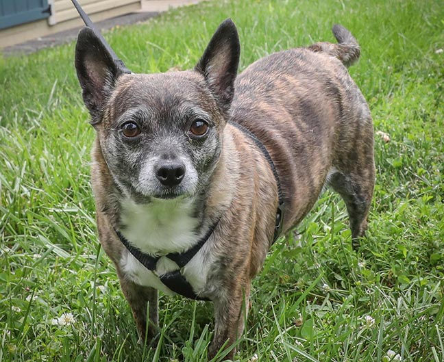 N.J. pets in need: Feb. 18, 2019