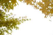 Portland Thursday weather forecast: Sunny, sunny, sunny - how long can it last?