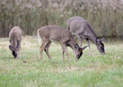 15 ways a NY deer hunter can break the law without knowing it