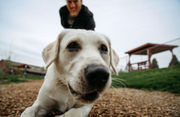 Looking to adopt a pet? What to know for Saturday's Empty the Shelters event