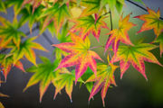 Photos: 2018 Fall foliage in the mid-state