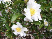 These winter-blooming plants will add color to your garden