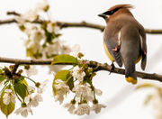 What's in your backyard? How to identify 11 Oregon birds by sound and sight