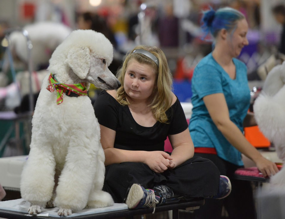 Hounds abound at the Holiday Classic Cluster Dog Show in West Springfield (photos)