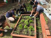 N.J. school kids grow green thumbs, give hydroponic crops to the needy