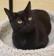 Area pets available for adoption December 12, 2018 (PHOTOS)