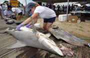 Fish at Alabama Deep Sea Fishing Rodeo much bigger