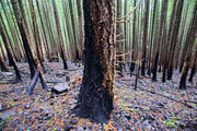Rejoice, Columbia gorge hikers: PCT, other trails reopen for first time since fire