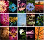 2018 garden photo contest: Vote for your favorite
