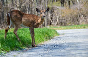 10 things to know about deer hunting in Michigan