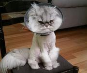 Wild whiskers: Oregon's top 10 crazy cat stories