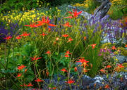 Garden book review: 'Northwest Garden Manifesto' promotes sustainable landscapes (photos)