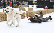Winterfest 2019 to bring cardboard sled, dog races to Grand Haven