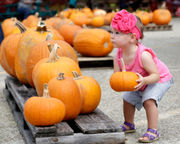 Pumpkin patches to visit in and around New Orleans