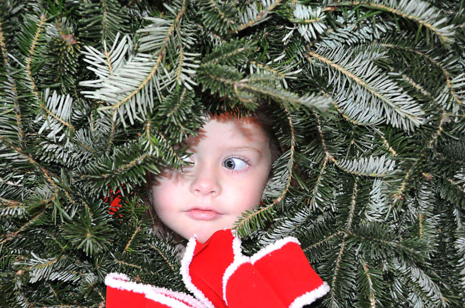 Beavers Tree Farm Facebook page - Here's Where To Cut Your Own Christmas Trees In Alabama AL.com