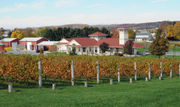 Region's best wineries to sit out and enjoy the view