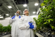 Massachusetts marijuana research czar envisions open database, annual conference