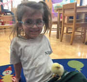In Class: Young students greet newly hatched chicks -- adorable!