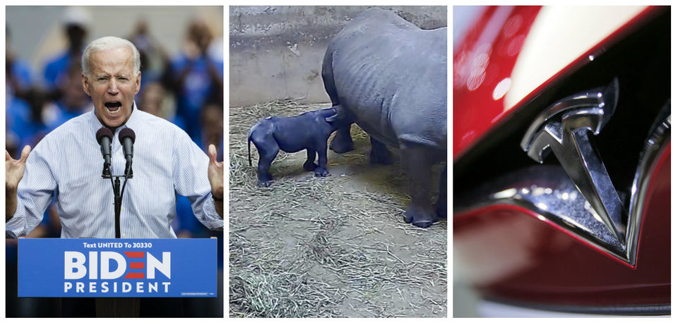 Biden responds to Trump, rare rhino born, Tesla lowers prices & more: What's trending today