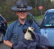 Injured osprey recovering after being saved by Massachusetts State Police trooper