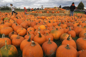 FULL LIST: Pumpkin patches in Upstate NY: 25 best picking destinations for fall fun