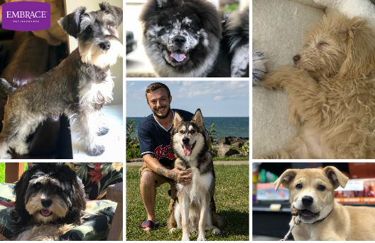 Puppies named Gal through June: Start your weekend with these 24 faces from Cleveland's Cutest Puppy Contest