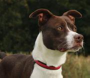 N.J. pets in need: Nov. 5, 2018