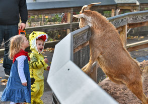 Saturday was the first day of the Zoo Boo, the Rosamond Gifford's popular Halloween-themed event.