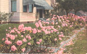 See why Portland's called the 'City of Roses' at Oregon Historical Society exhibit