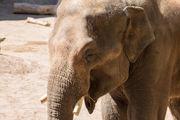 Samson the elephant arrives at Oregon Zoo
