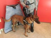 Comedian Katt Williams never paid for service dog, Las Vegas man says