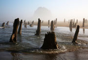 How to photograph the ghost forest on the Oregon coast