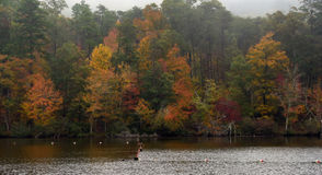 Autumn color in and around Mt. Cheaha State Park. (Joe Songer | jsonger@al.com).